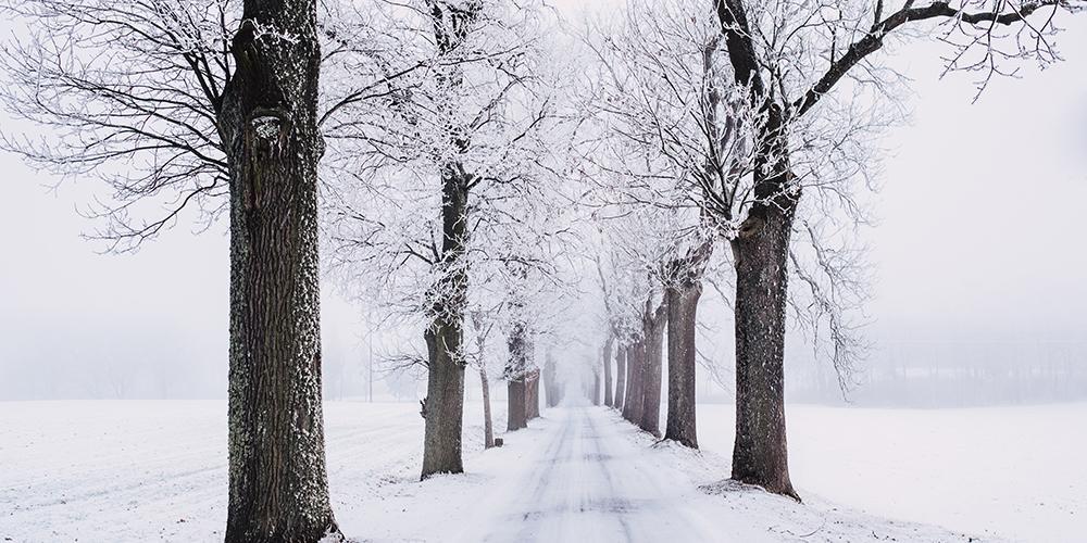 Straße in einer Schneelandschaft mit Bäumen und Feldern